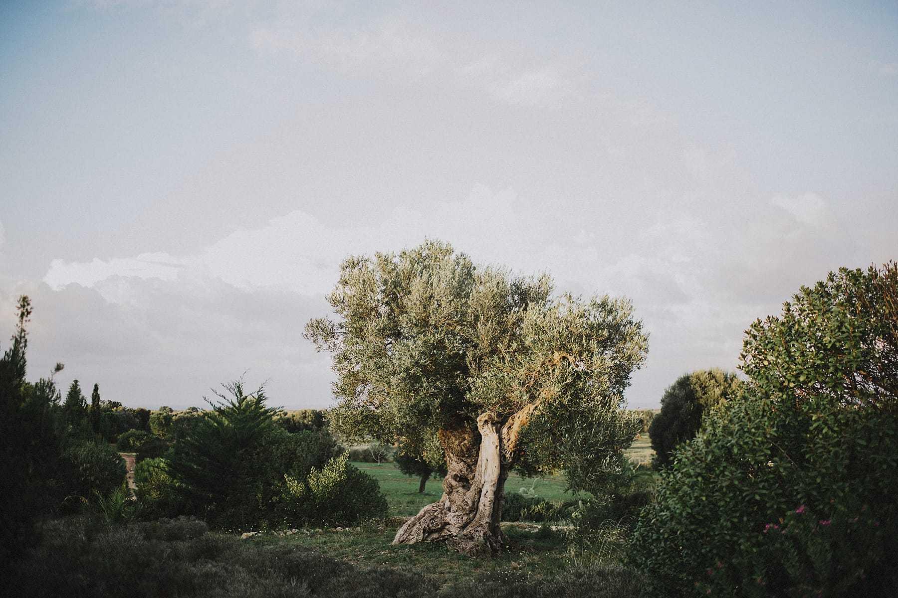 hilario_sanchez_fotografo_boda_ostuni_italia_074