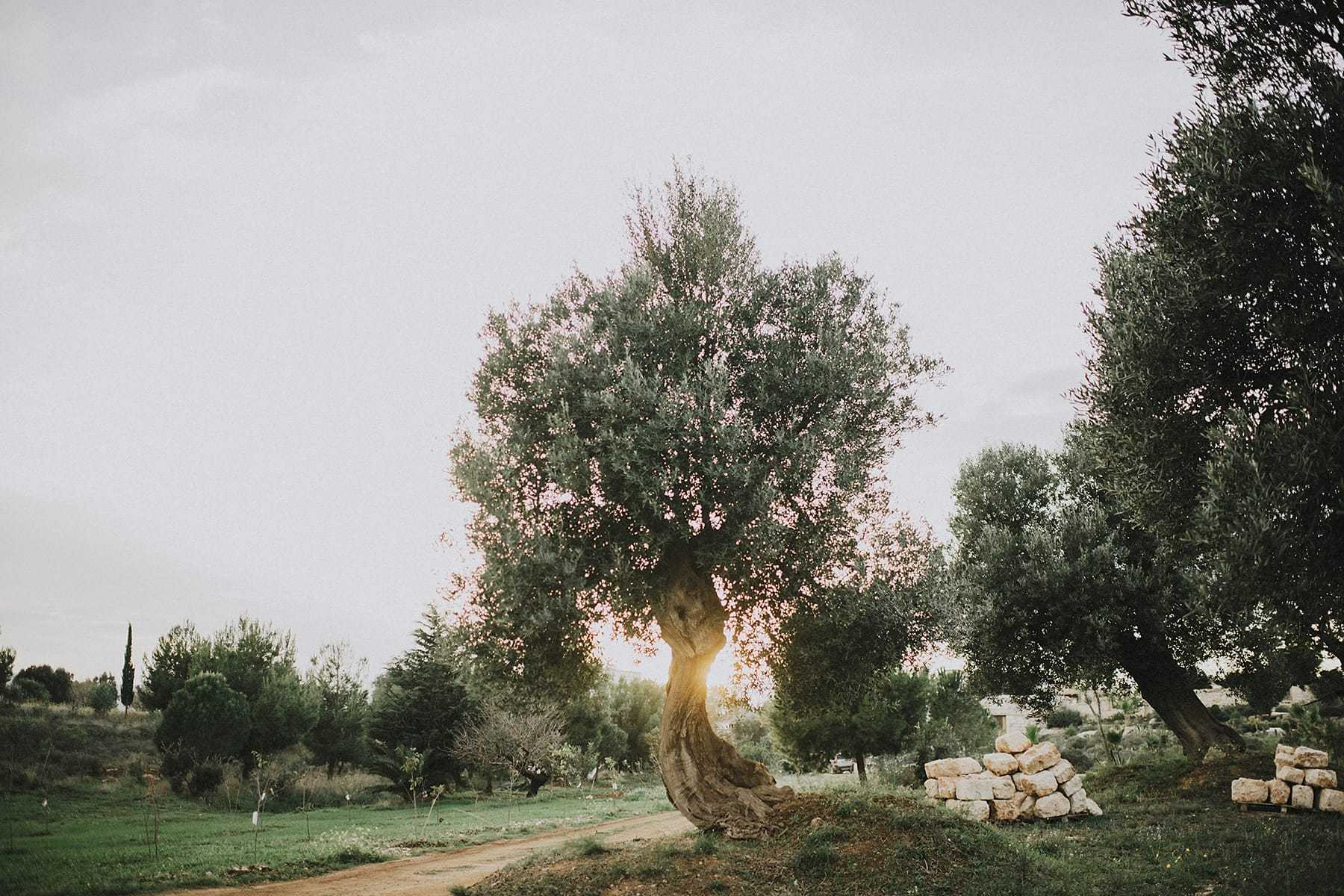 hilario_sanchez_fotografo_boda_ostuni_italia_098