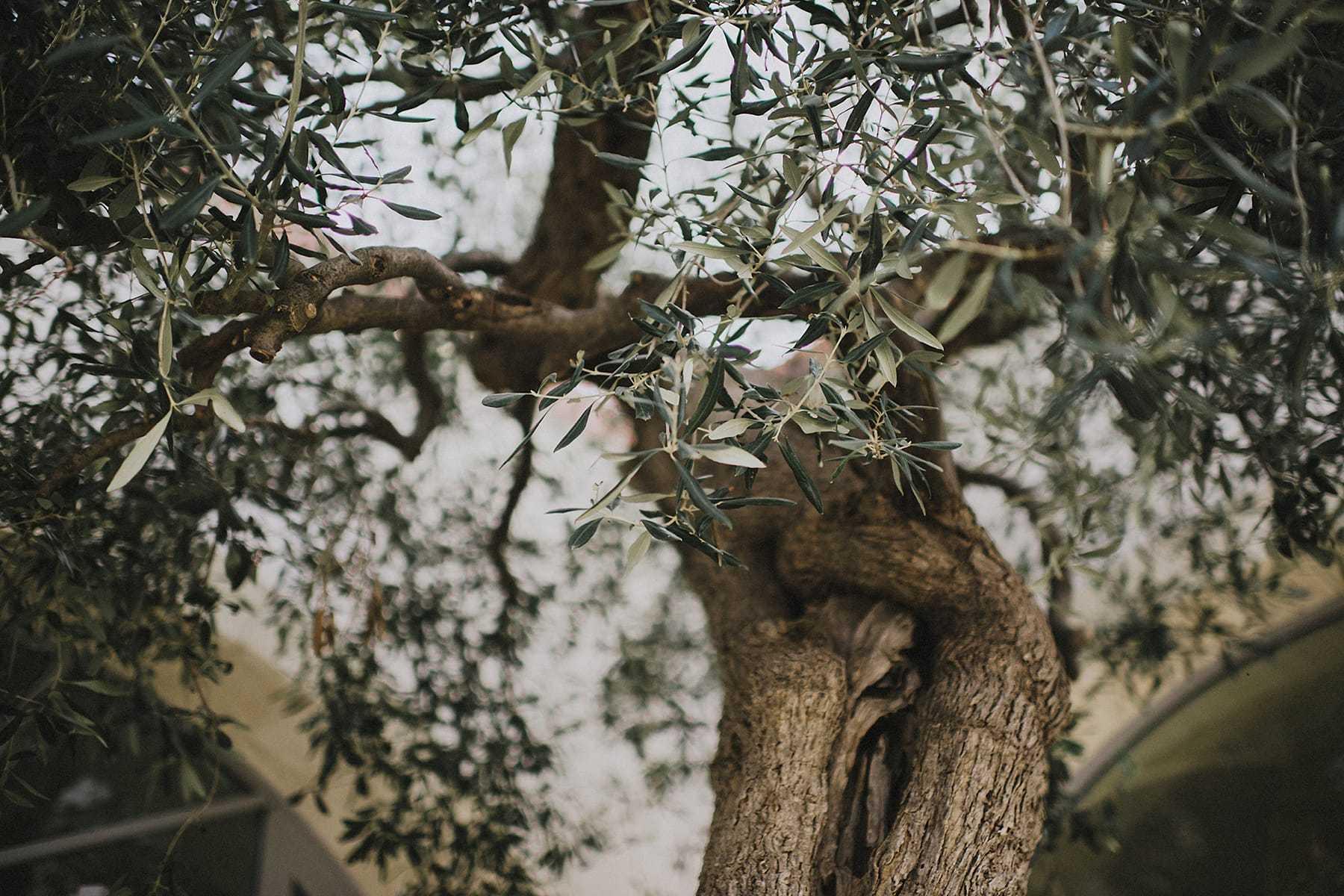 hilario_sanchez_fotografo_boda_ostuni_italia_151